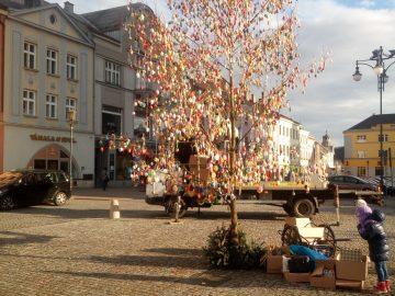 Kraslicovník hranický na náměstí / fotogalerie / Kraslicovník opět zkrášluje náměstí, foto: Dagmar Holcová