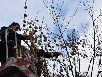 Kraslicovník hranický na náměstí / fotogalerie / Pracovnice MKZ Hranice nazdobují kraslicovník, foto: Radka Kunovská