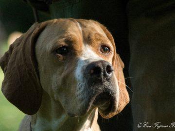 Jarní svod loveckých psů