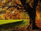 Vysazení Stromu republiky