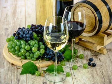 Degustace vín z Hustopečských hor