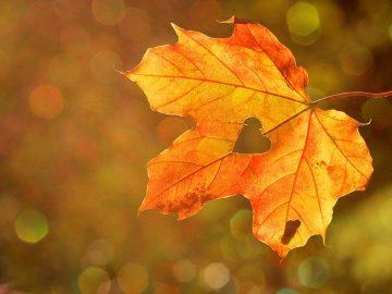 2. Podzimní slavnost