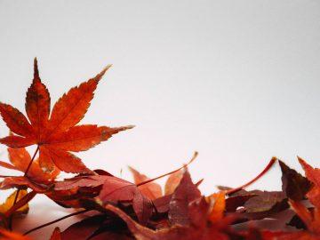 Podzimní dílna