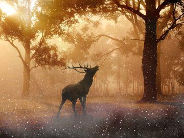 Uspávání lesa s Montíkem